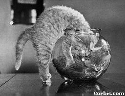 Kittens in Fish Bowl