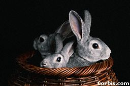 rabbits-in-basket.jpg (9030 bytes)
